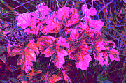 Purple Framed Prints - Pink leaves Framed Print by Carol Lynch