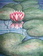 Lilly Pond Paintings - Pink Lily by Conni  Reinecke