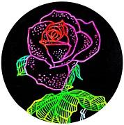 Jim Harris - Pink Line Rose