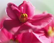 Linda  Smith - Pink Looks Good On You