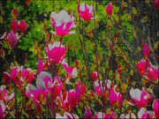 Gina  Art Photography - Pink Magnolias