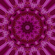 Mandala Photos - Pink Mandala Image 1 by Carrie Cranwill