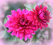 Carolyn Ricks Metal Prints - Pink Mums Metal Print by Carolyn Ricks