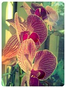 Cellphone Framed Prints - Pink Orchids Framed Print by Lee Farley