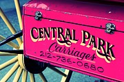 Carriages Posters - Pink Park Poster by TelAvivPaparazzi Photography