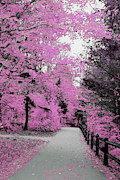 Walkway Mixed Media - Pink pathway by Optical Playground By MP Ray