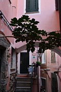 Dany Lison Photography - Pink Patio