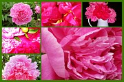 Margaret Newcomb - Pink Peonies Collage