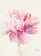 Close-up Floral Images Prints - Pink Peony Watercolor Paintings of Flowers Print by Beverly Brown Prints