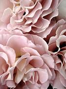 Pink Petal Profusion Print by Ann Powell