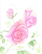 Lavender Drawings Originals - Pink Petals by Dusty Reed