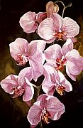 Orchid Art Paintings - Pink Phalaenopis Orchids by Alfred Ng