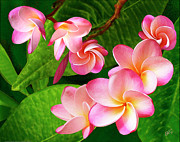 Lush Colors Digital Art Posters - Pink Plumeria Poster by Ben and Raisa Gertsberg