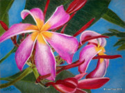 Pink Blossoms Pastels Framed Prints - Pink Plumeria Blossom Framed Print by Lisa Pope