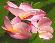 Lush Colors Digital Art Posters - Pink Plumeria Trio Poster by Ben and Raisa Gertsberg