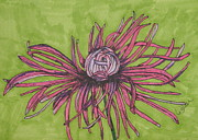 Daisies Drawings Prints - Pink Rhapsody Print by Marcia Weller-Wenbert