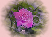 Valentines Day Digital Art - Pink Rose by Bill Cannon