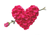 Online Flower Shop Posters - Pink Rose Heart valentine Poster by Boon Mee