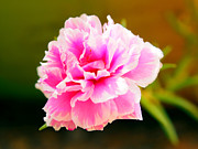 Justin Woodhouse Metal Prints - Pink Rose Metal Print by Justin Woodhouse