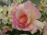 Kimberly-Ann Talbert - Pink Rose