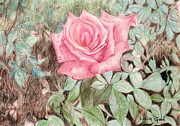 Raindrops Drawings Prints - Pink Rose Print by Linda Ginn