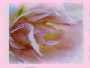 D Whitehurst - Pink Rose Watercolour