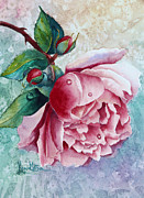 Karen Mattson - Pink Rose With Waterdrops