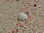 Kimberly Perry - Pink Sand Beach Shells
