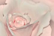 Pink Satin Print by Kaye Menner