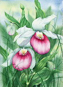 Johanna Axelrod Prints - Pink Showy Lady Slippers Print by Johanna Axelrod