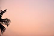 Corinne Rhode - Pink Skies