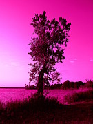 Pink Sky Print by Mickey Harkins
