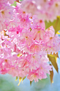 Angela Doelling AD DESIGN Photo and PhotoArt - Pink Spring