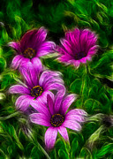Garden Art Prints - Pink  Print by Stylianos Kleanthous