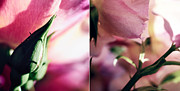 Pink Summer Roses Print by Sabine Jacobs