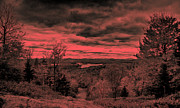 Fir Trees Digital Art Prints - Pink Sunset Print by David Patterson