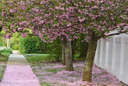 Bath Mixed Media - Pink Tree Petal Path by Adspice Studios