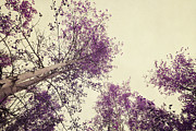 Canopy Photos - Pink Trees by Priska Wettstein
