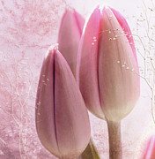 Pink Tulips  Print by Elaine Manley