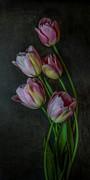 Hugo Bussen - Pink tulips