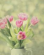 Pink Tulips Print by Kim Hojnacki