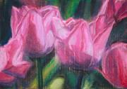 Pink Tulips Print by Sarah Vandenbusch