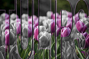 Pink Tulips Print by Trish Tritz