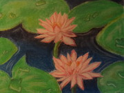 Prints On Canvas Pastels Framed Prints - Pink Water Lilies Framed Print by Sai Archana Vinod kumar