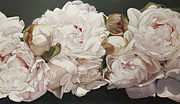 Peonies Paintings - Pink White Peonies Oil Painting by Thomas Darnell