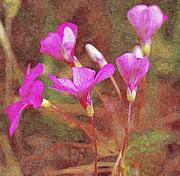 John Tidball  - Pink Wildflowers