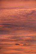 Jon Burch Photography - Pinky