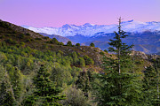 Sierra Nevada Photos - Pinsapar at Sierra Nevada by Guido Montanes Castillo