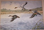 Boris Riab - Pintail Ducks In Flight