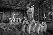 Wooden Barns Prints - Pinto Beans Print by Debra and Dave Vanderlaan
